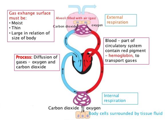 body_cells
