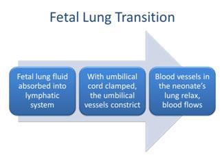 fetal_lung